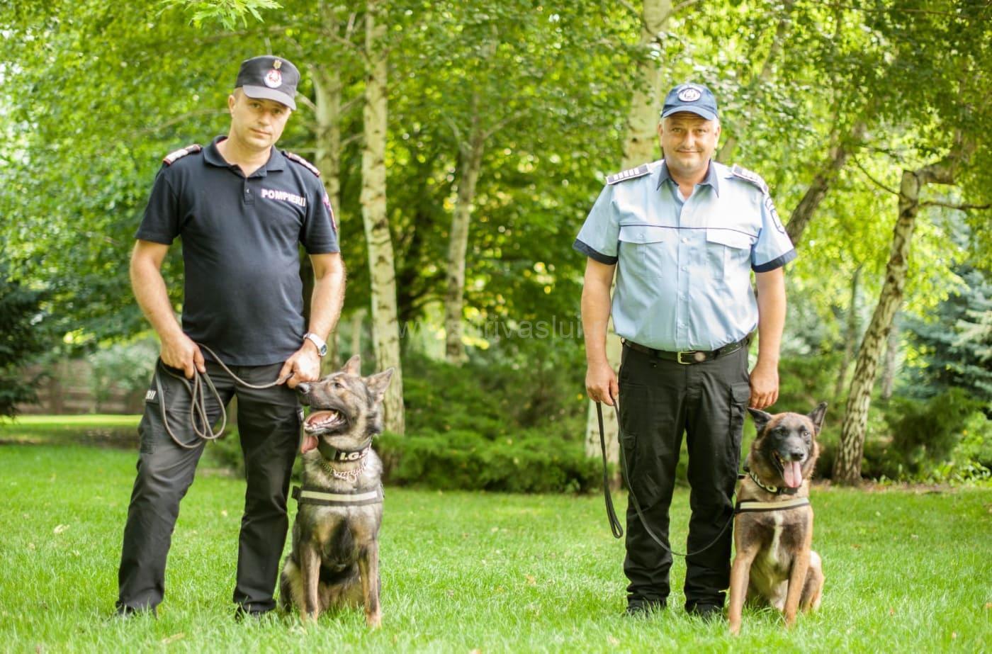 Câinii oamenilor în uniformă: Eroii cu simțuri ascuțite