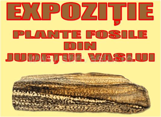 Expoziție de plante fosile din Județul Vaslui