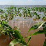 Prime de asigurare a culturilor, a animalelor și a plantelor